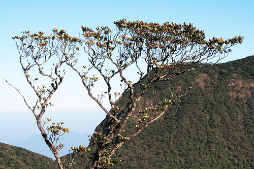 sri pada 10 Most Endangered Forests on Earth